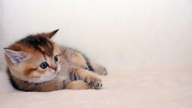 Можно ли кормить котенка детским питанием?