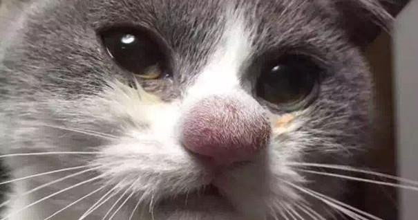 Кошку укусила оса - что делать, первая помощь