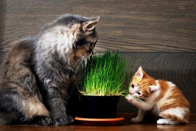 Как научить котенка кушать самостоятельно в домашних условиях