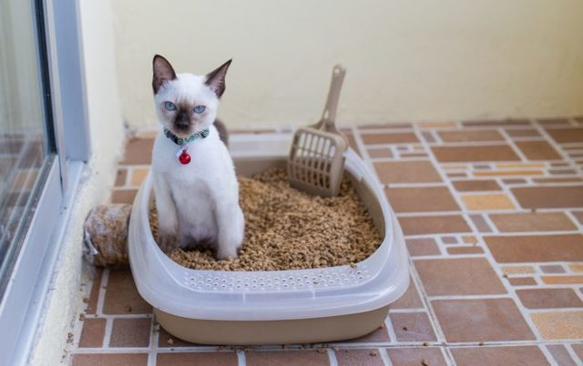 Касторовое масло для кошек при запоре: можно давать или нет