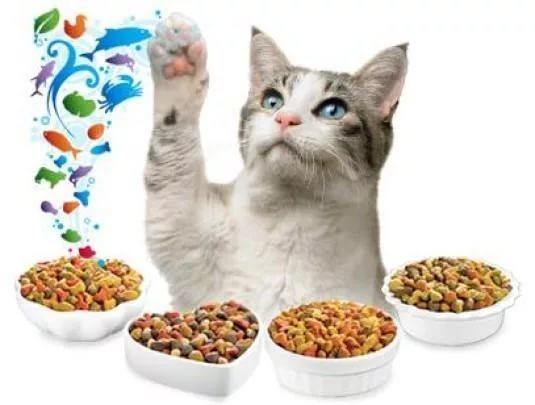 Сколько сухого корма нужно кошке в день