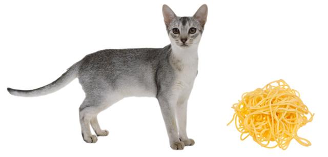 Рис кошкам - можно давать или нет