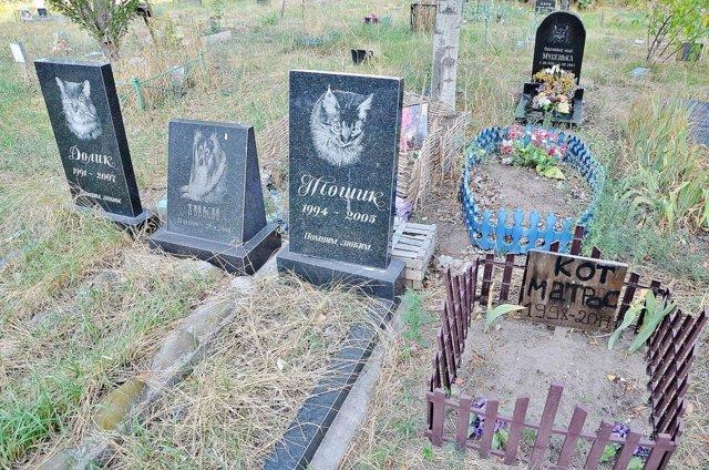 Как и где похоронить кошку зимой?