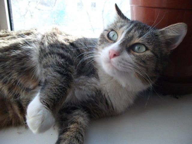 8 симптомов рака молочной железы у кошки: что делать