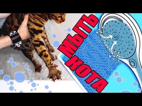 Температура воды для купания кошки - правила и особенности
