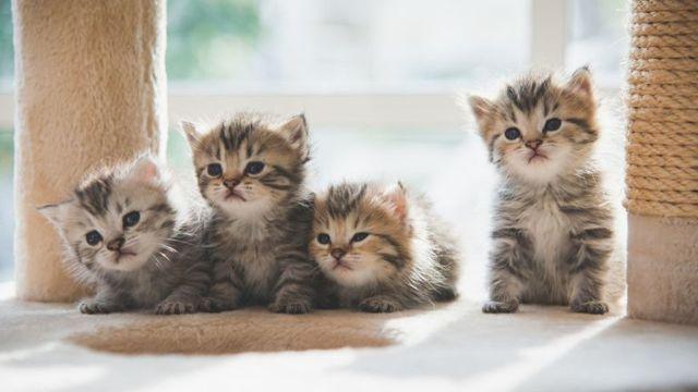 Прививки кошкам по возрасту - таблица и график, зачем нужны