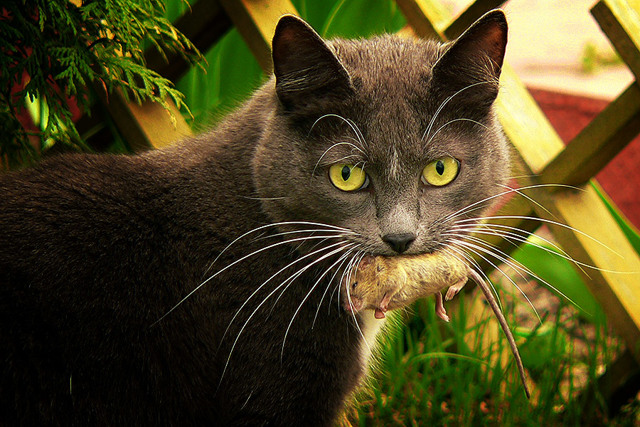 Почему кот не мурчит - причины и что это значит?