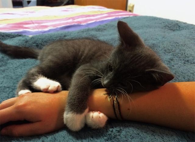 10 причин почему кошка не сидит на руках - как приучить