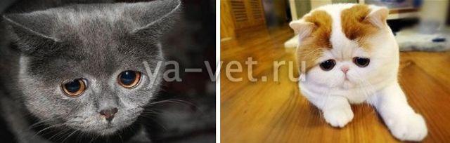 5 причин почему кошка везде ссыт - что делать