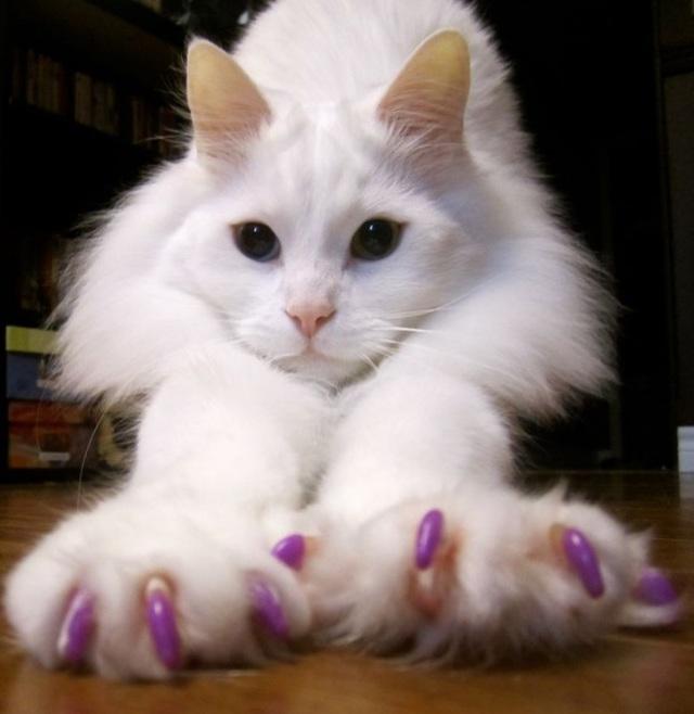 Мягкие коготки для кошек - плюсы и минусы