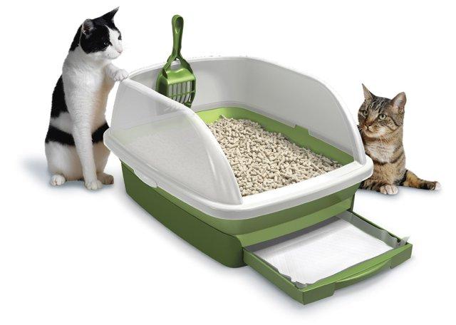 6 причин поноса у котенка - симптомы и лечение
