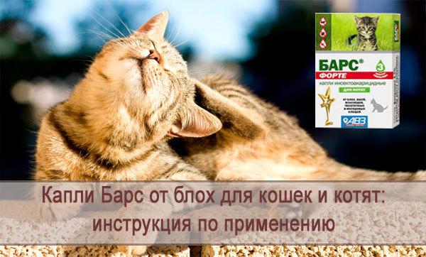 Барс форте для кошек - инструкция по применению капель