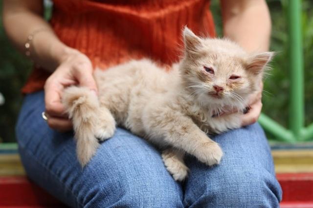 12 симптомов вирусного перитонита у кошек - как лечить