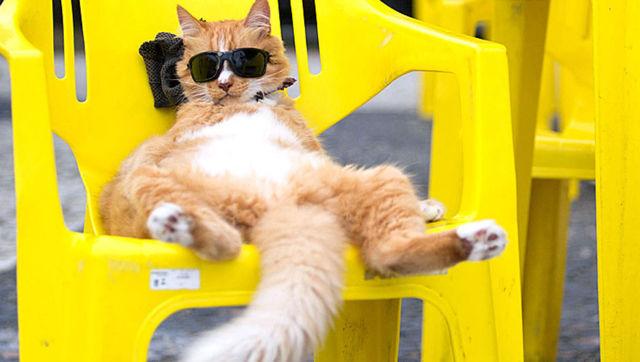 Почему кошки виляют хвостом - что это значит, эмоции кота