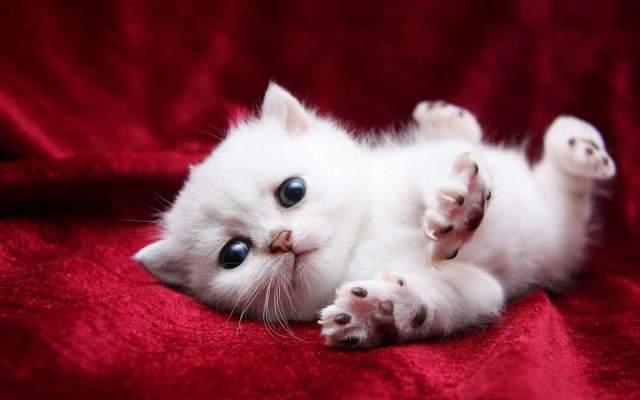 13 причин почему кошка дышит с открытым ртом - что делать