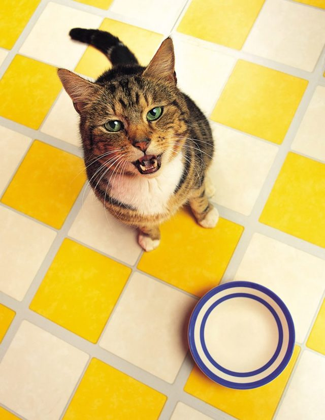 Как отучить кошку от корма -лучшие методы смены рациона
