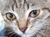 Умеют ли кошки плакать - причины слез