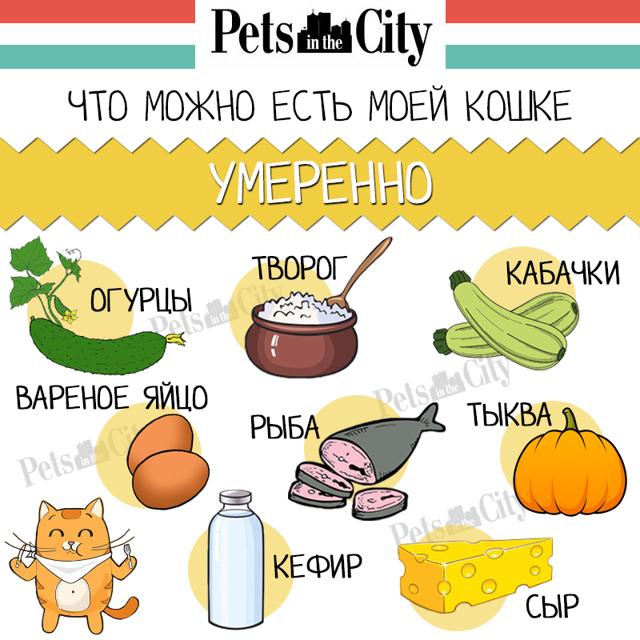 Можно ли кошке давать чай?