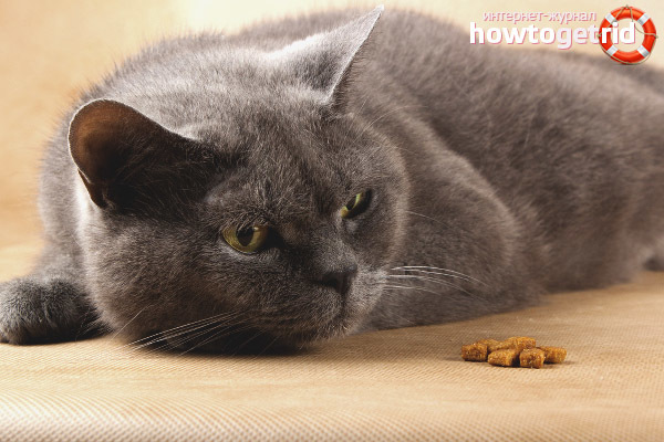 У котенка пропал аппетит - причины и что делать
