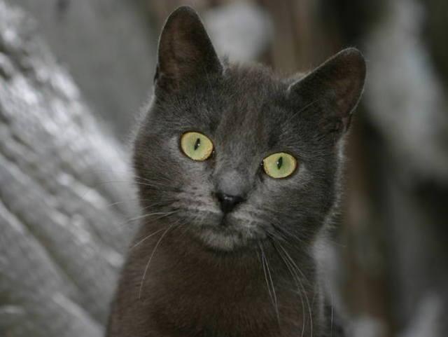 11 причин гастрита у кошек - симптомы, лечение, профилактика