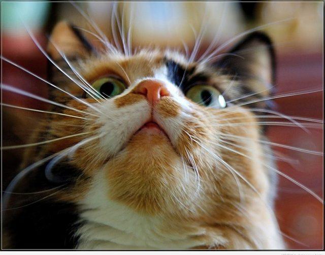 Зачем кошке нужны усы - функции усов