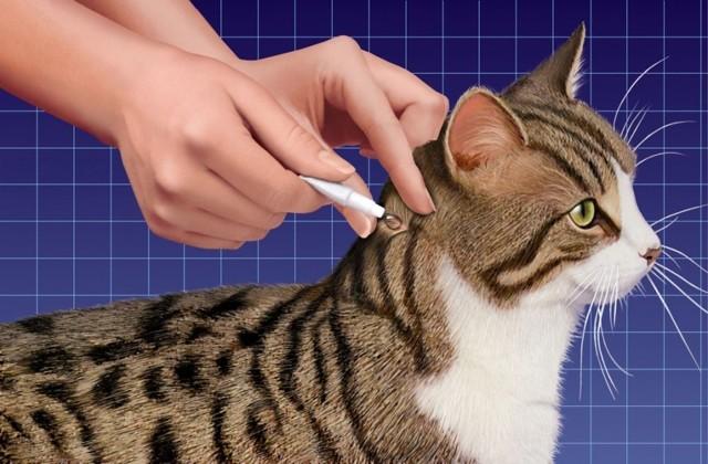 Кошка слизала капли от блох - симптомы отравления