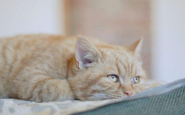 6 причин пиометры у кошек - симптомы и лечение