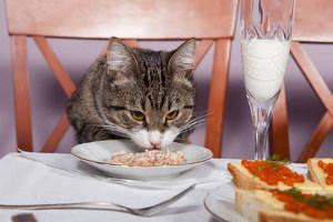 Можно ли бананы кошкам - польза и вред