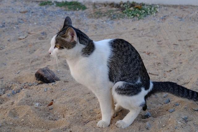 16 причин почему слизь в кале у кота - как лечить