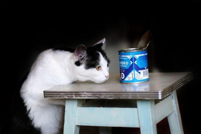 Можно ли давать котам сгущенку