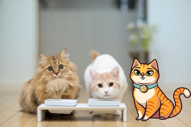 Какого вкуса не чувствуют кошки