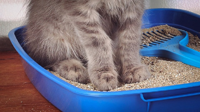 Что делать, если у кота понос в домашних условиях - чем лечить?