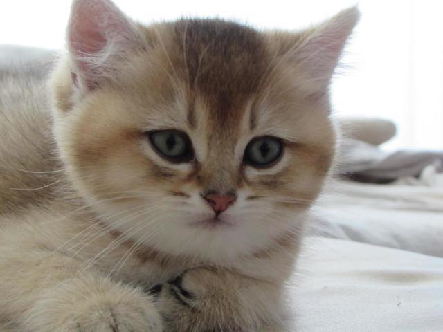Глисты в кале у кошки - чем лечить