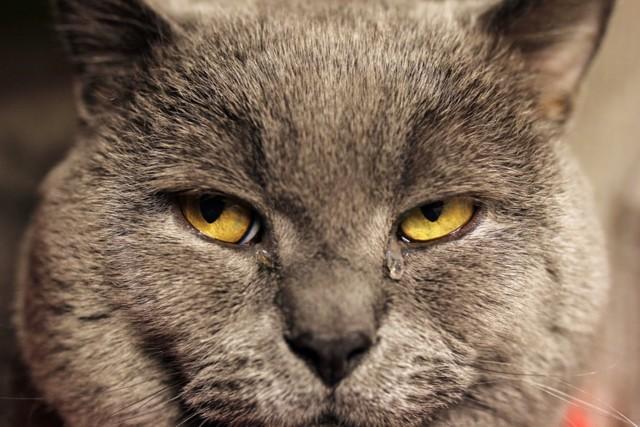 У кота на носу черные точки