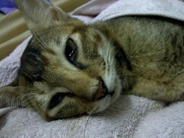 7 причин почему у кошки текут слюни - что делать