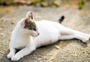 Сумамед кошке: инструкция по применению