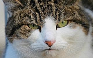 Чем отмыть мочу кота - домашние способы и средства