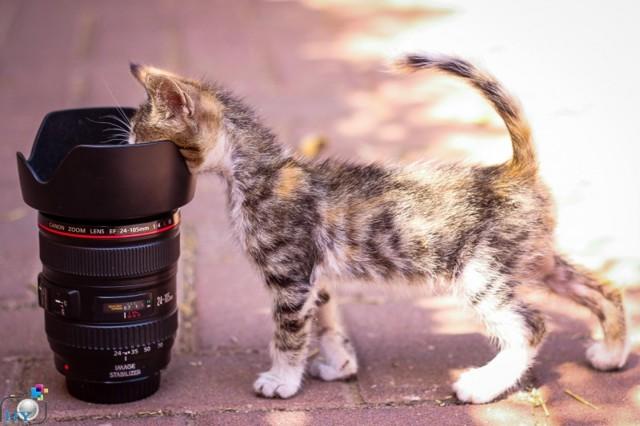 Как кошки проявляют любовь к хозяину - топ 18 проявлений любви