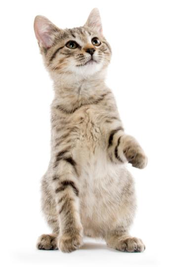 Суспензия Празител для кошек и котят: инструкция по применению