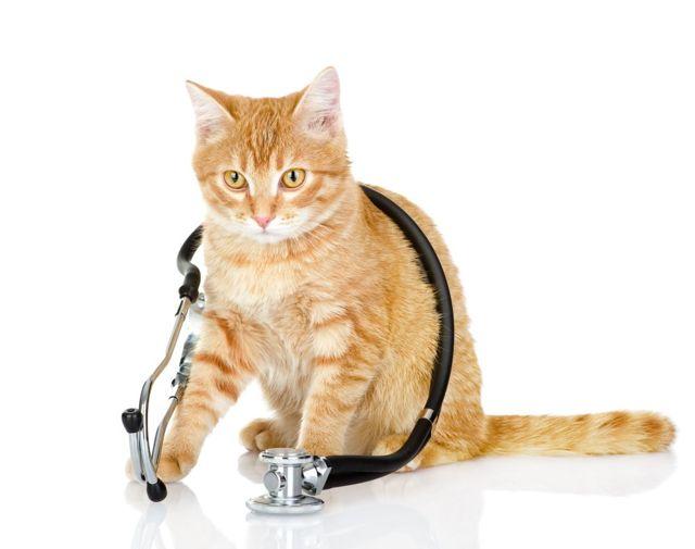 3 причины почему лысеет кошка - симптомы и лечение