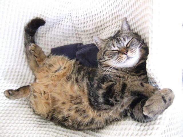 Почему котенок много спит