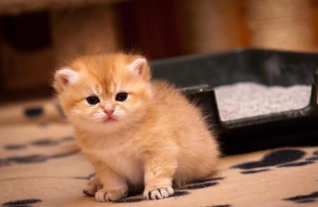 3 причины почему котенок не какает - как лечить