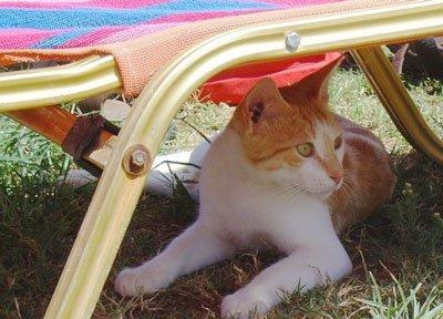 Потеют ли кошки - Как и где у может выделяться пот