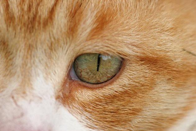 Левомицетин для кошек: инструкция по применению