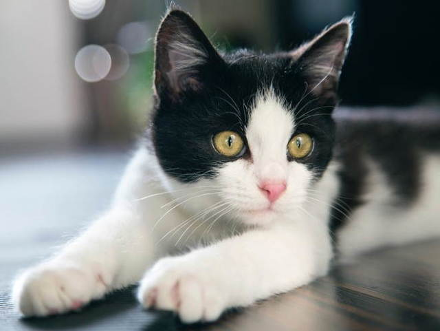 6 причин бельма на глазу у кошки - диагностика и лечение