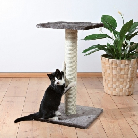 7 правил как приучить взрослого кота к когтеточке
