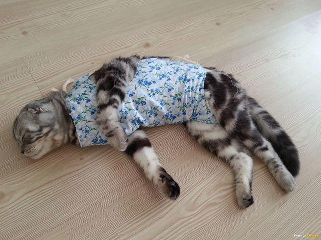 Кошка после стерилизации - уход после операции в домашних условиях