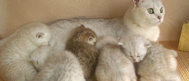 7 причин поноса у кормящей кошки - симптомы и лечение