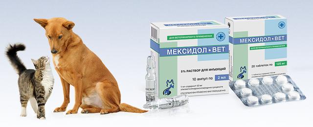 Мексидол для кошек: инструкция по применению