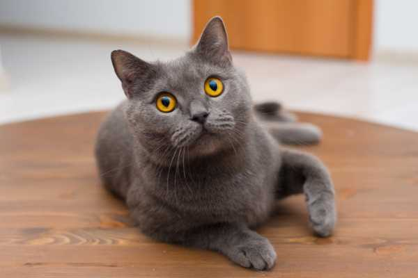 Может ли кастрированный кот хотеть кошку - 4 признака